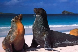 img-1212242327-Galapagos_leoni_marini